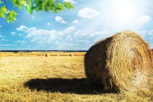 """Corso per """"Imprenditore Agricolo Professionale"""" al via il 1 marzo 2017"""
